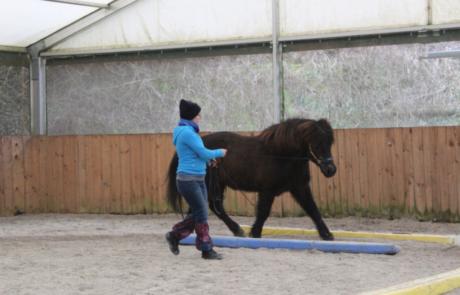 Equikinetik - sie verhilft dem Pferd zu einer gleichmäßigen, starken Muskulatur.