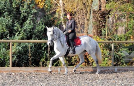 Marcella Becker - im Dialog mit dem Pferd